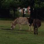 Lamont  Animal Farm